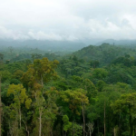 Tropical forests, Congo Basin (DRC) © AFD